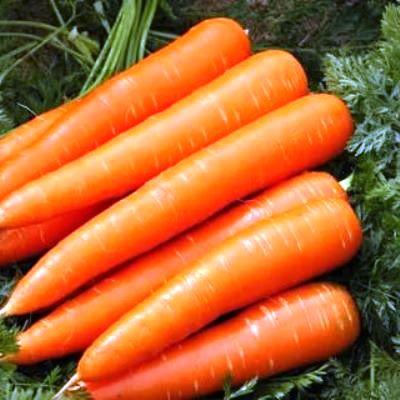Купить Морковь Красный великан в пакетах