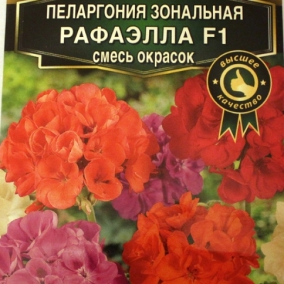 Купить Пеларгонию Рафаэлла смесь