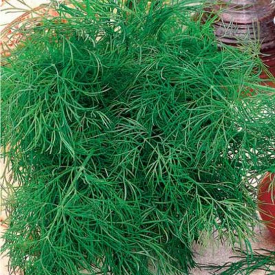 Купить Тмин Восточный аромат