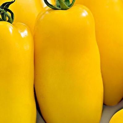 Томат Банановые ноги 10 шт