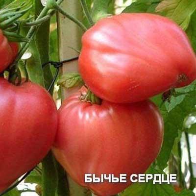 Купить томат Бычье Сердце