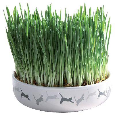 Купить Трава для кошек
