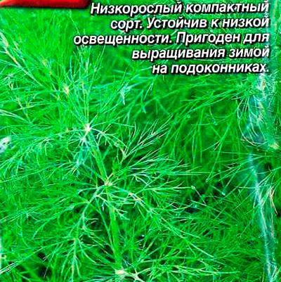 Купить Укроп Аврора