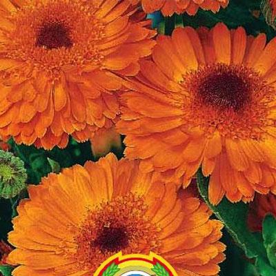 Купить Календула махровая Оранжевый король