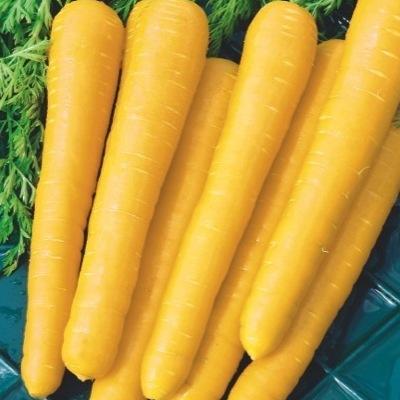 Купить Морковь Мармелад желтый