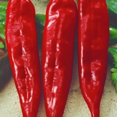 Купить Перец острый Чили семена