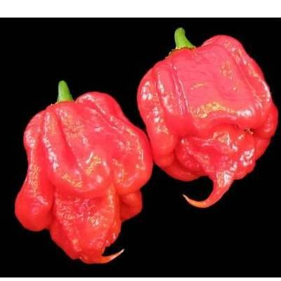 Купить перец Тринидадский скорпион красный