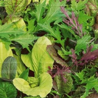 Купить Салат Японская зелень смесь