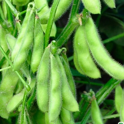 Купить Соя Деликатес овощная