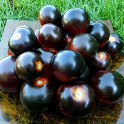 Купить Томат Черная гроздь