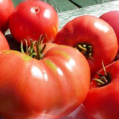 Купить томат Юсуповский