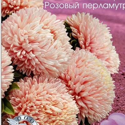 Купить Астра Хризантелла Розовый перламутр