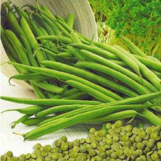 Купить Чечевица зеленая