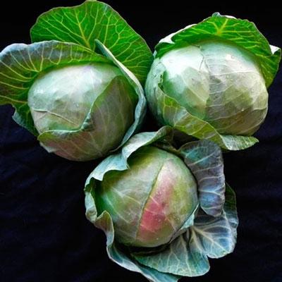 Купить капусту Килагрег