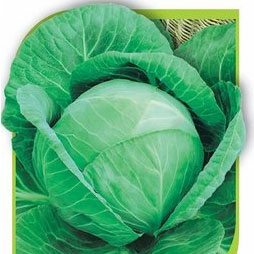 Купить капусту Ларсия