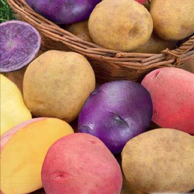 Купить Картофель Салют смесь