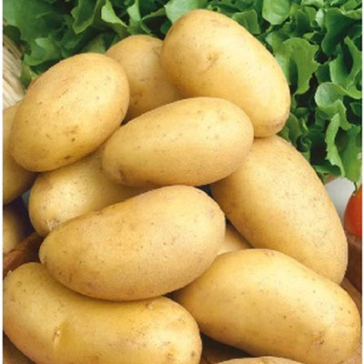 Купить Картофель Сказка