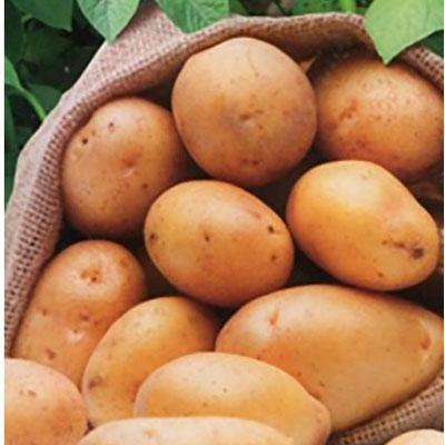 Купить Картофель Триумф