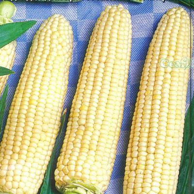 Купить Кукуруза белая Белое облако