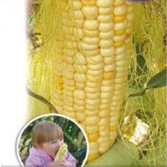 Купить Кукуруза Сливочный нектар Вкуснятина