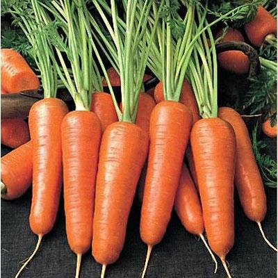 Купить Морковь Абако в пакетах