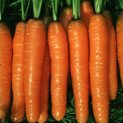 Купить Морковь Балтимор