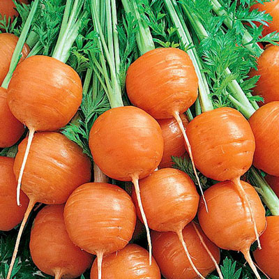 Купить Морковь Каротель парижская