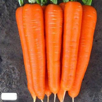 Купить Морковь Лагуна в пакетах