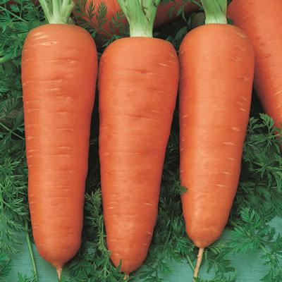Купить Морковь Ред кор в пакете (сортотип Шантанэ)