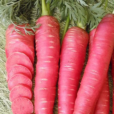 Купить Морковь Рубиновая