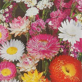 Купить Сухоцветы Неувядающий букет смесь