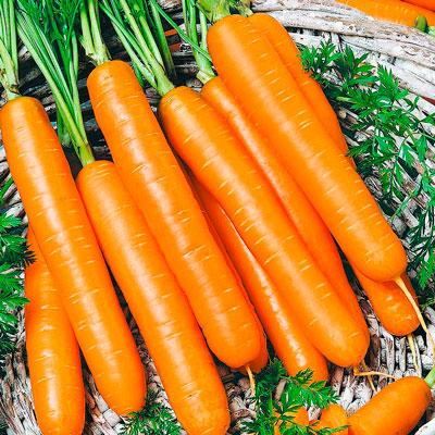 Купить Морковь Корона