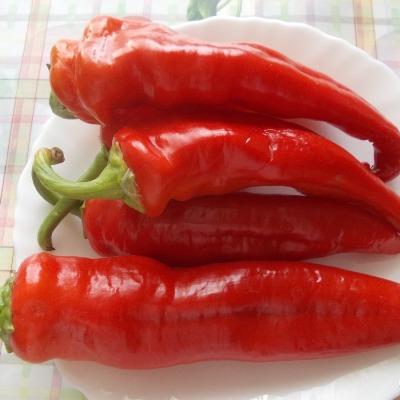 Купить  Перец Красный толстяк