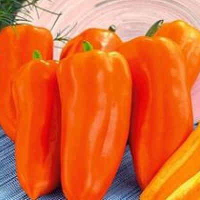 Купить Перец Оранжевый бык