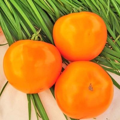 Купить Томат Апельсин