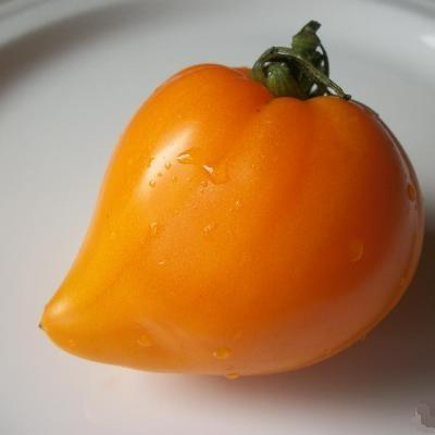 Купить Томат Оранжевое сердце (Лискин нос)
