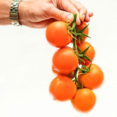 Купить томат Золотая канарейка