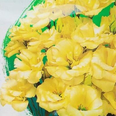 Купить Эустома Эхо желтая F1 крупноцветковая махровая