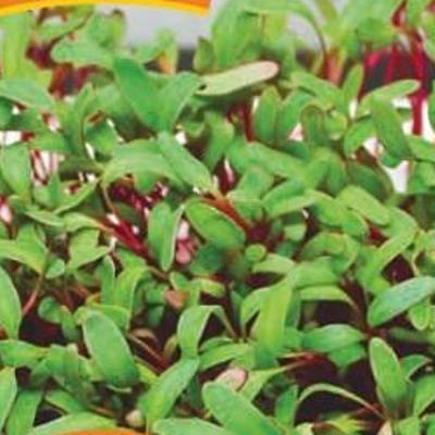купить Микрозелень Мангольд микс серия bio greens