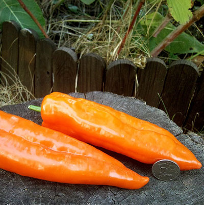 Купить Перец Рамиро оранжевый
