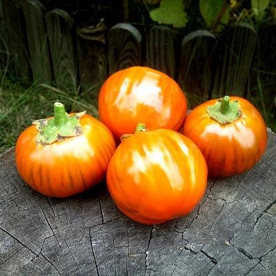 Купить Баклажан Турецкий оранжевый