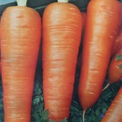 Купить Морковь Настена-сластена в пакете