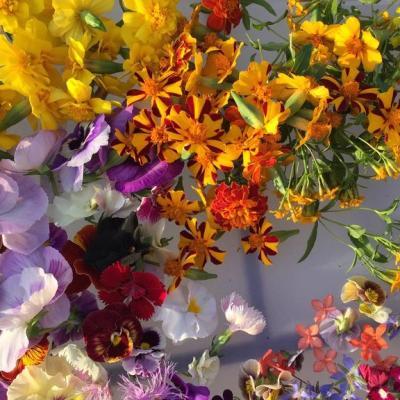 Купить Смесь раннецветущих растений
