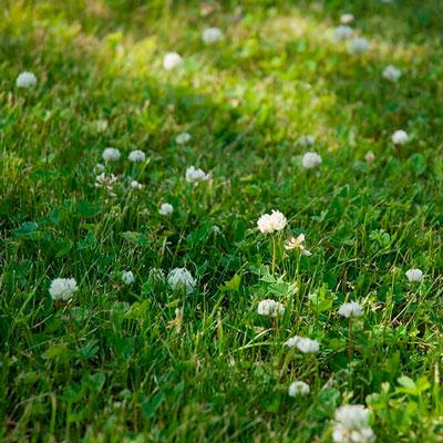 Купить семена газонной травы Для ленивых