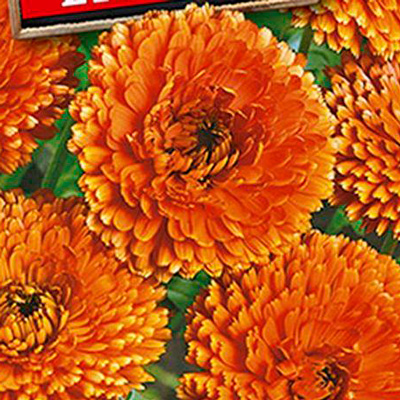 Купить Календула красно-оранжевая махровая Солнце Египта