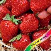 Купить Клубника ремонтантная Красная варежка крупноплодная ампельная