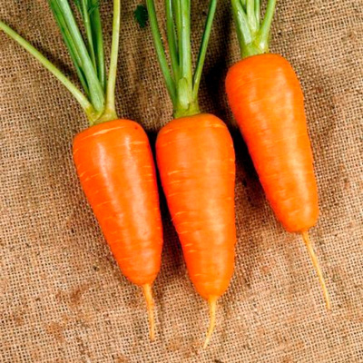 Купить Морковь Курода Шантанэ в пакетах