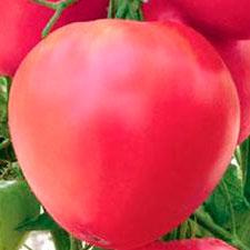 Купить Томат Воловье сердце