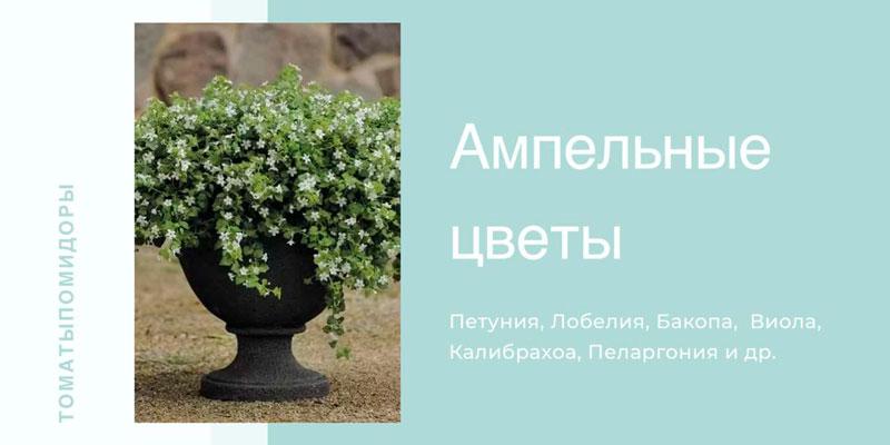 Купить ампельные цветы