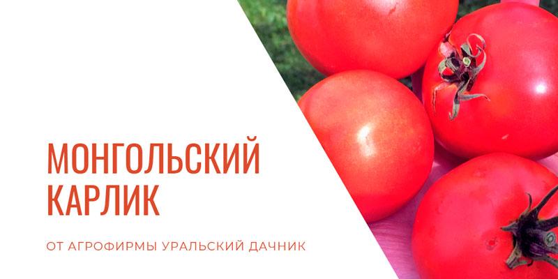 Купить томат Монгольский карлик